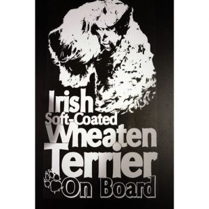 wheaten terrier on board
