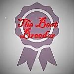 Rosette for Breeder