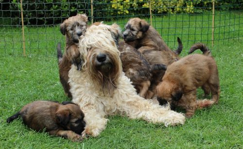 mum and pups
