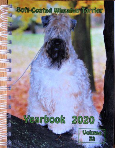 YB 2020